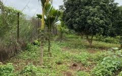 Bán vườn cây ăn trái 2 mặt tiền trước sau xã Hoà Khánh thông Ea kao Buôn Ma Thuột Đăk Lăk